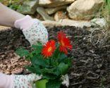 acolchado plantas- malas hierbas