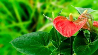 Plantas filtrantes para alérgicos