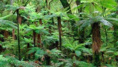 Anturio gigante o jungle king cuidados plantas jardiner a for Plantas de interior hojas grandes