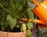 Plantación de cala