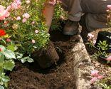 Rosales arbustivos y cubresuelos
