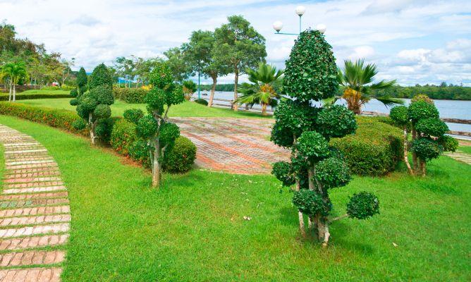 Arbustos para arte topiario decogarden - Arbustos para jardin ...