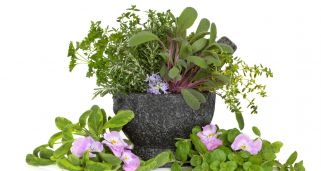 Plantación de plantas condimentarías y flores comestibles