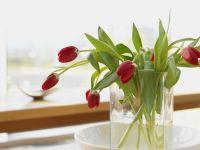 poder decorativo plantas