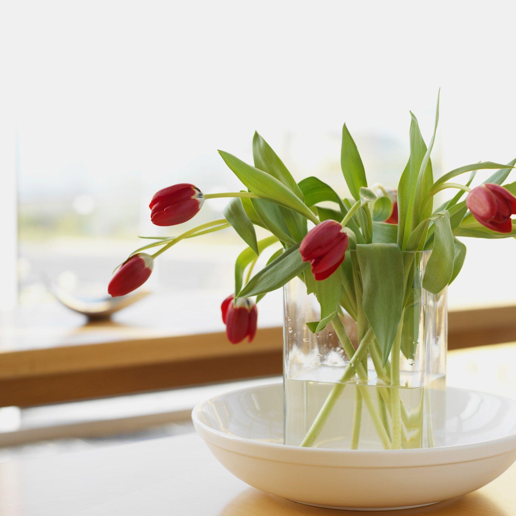El poder decorativo de las plantas