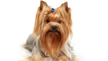 Peluquer a canina para perros de pelo largo decogarden - Como banar a un perro ...