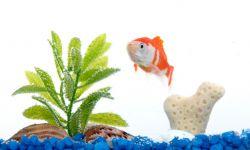 acuario principiantes