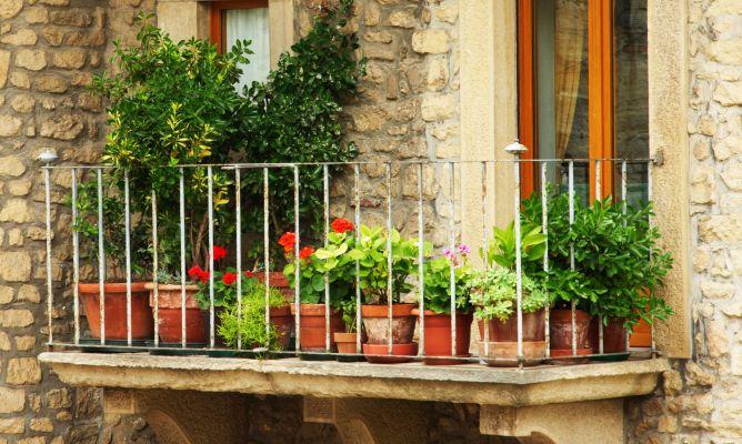 Plantas de temporada oto o invierno para terraza y balc n hogarmania - Decoracion de balcones con plantas ...