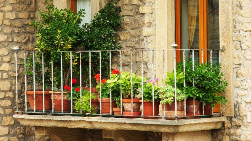 plantas de temporada para terraza y balcn