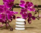 Orquídea para decorar un baño zen