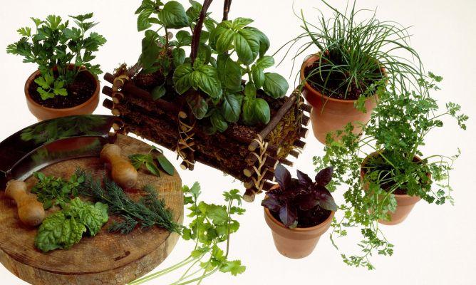 como plantar hortalizas en macetas