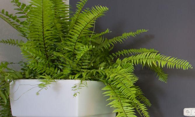 Plantar helecho en contenedor grande decogarden - Hogarutil plantas ...