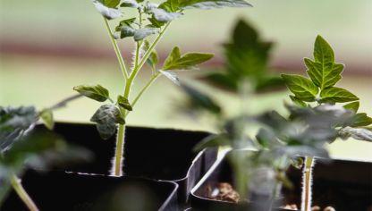 semilleros para la huerta