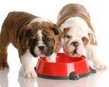 empacho mascotas - comida