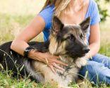Adiestramientos perros escolta muejres maltratadas
