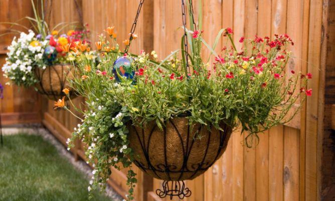 Plantas que cuelgan y trepan hogarmania for Aspiradora de hojas de jardin