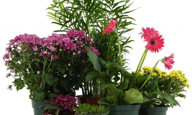 Las plantas de interior hogarmania - Plantas de jardin fotos ...