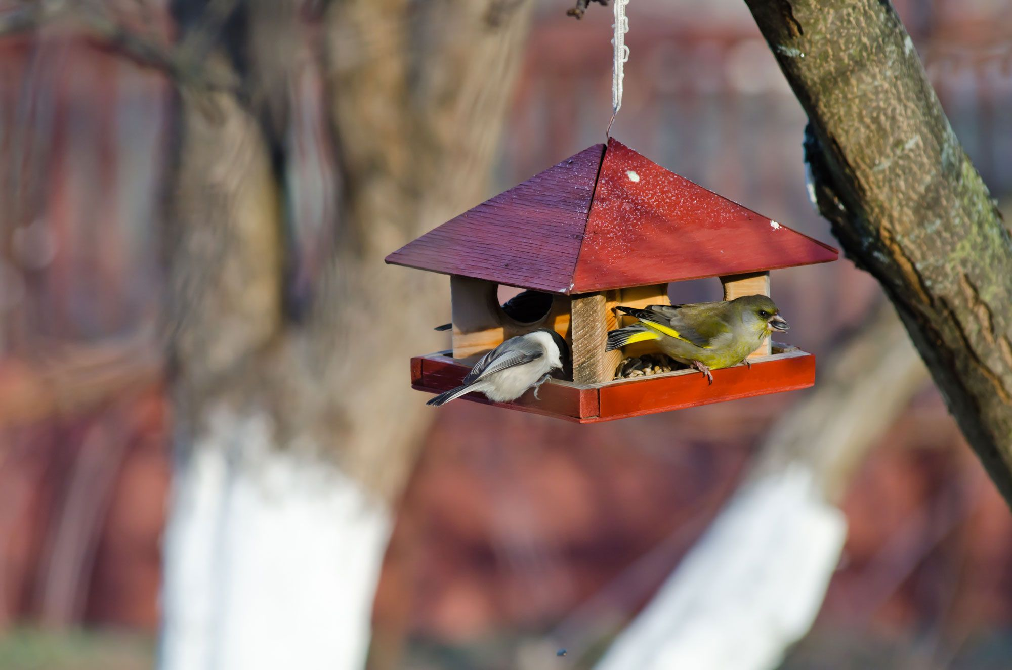 comederos pájaros