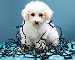 adornos navideños peligrosos mascotas - cables