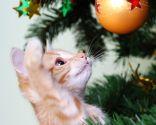 adornos peligrosos navideños mascotas - bolas