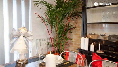 integrar plantas en la decoracin navidea