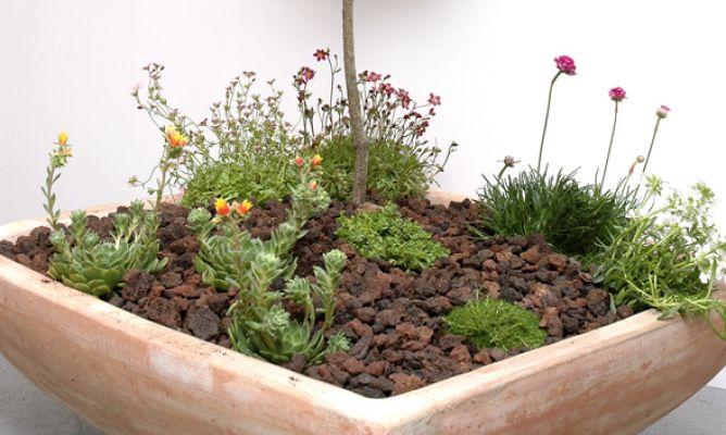 Jard n en miniatura hogarmania - Hogarmania jardineria ...