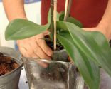 Plantar en jarrones de cristal