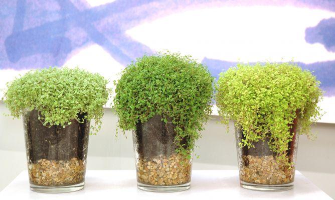 Plantar en jarrones de cristal hogarmania - Decoracion jarrones cristal ...