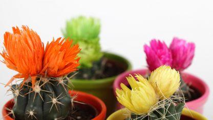 Plantas para decorar tu casa hogarmania - Plantas de interior pequenas ...