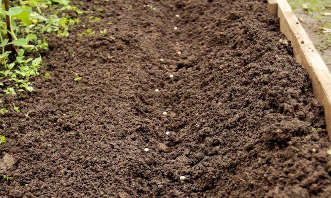 Cultivar habas guisantes y ajos bricoman a - Preparacion de la tierra para sembrar ...