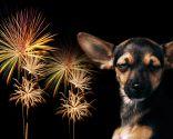 adornos peligrosos mascotas - fuego