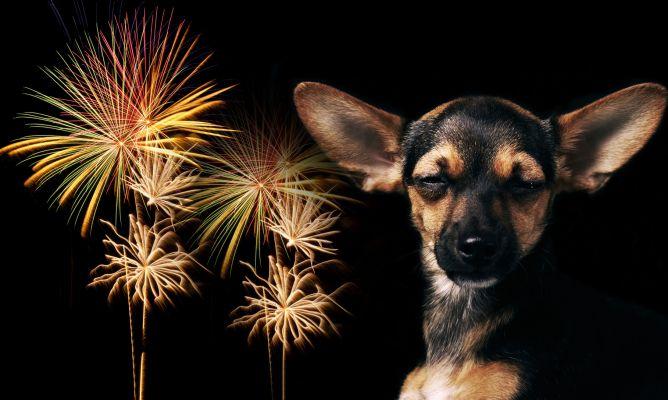 Tips para proteger a tu mascota del stress en este Año Nuevo - Imagen 6