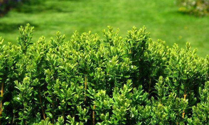 Setos separadores hogarmania for Separadores de jardin