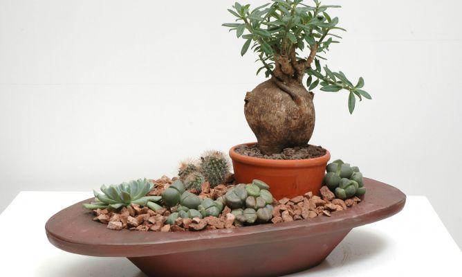 Composici n floral con cactus piedra hogarmania - Jardines con cactus y piedras ...