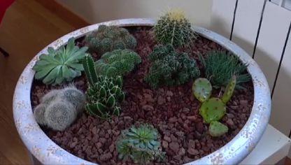 Decorar rinc n con cactus y plantas crasas decogarden - Jardines con cactus y piedras ...