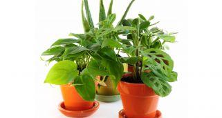 3 plantas de interior verticales para decorar el sal n - Jacinto planta interior ...