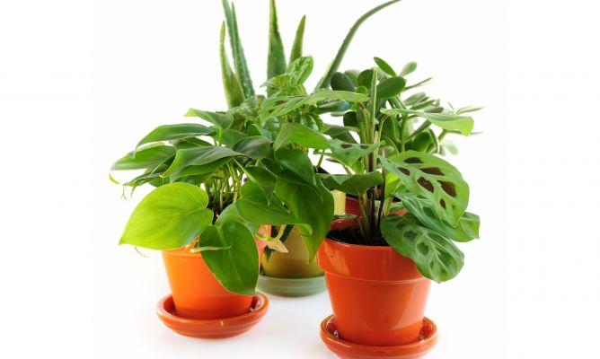 plantas de interior muy resistentes hogarmania