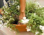 Composición luminosa con flores blancas