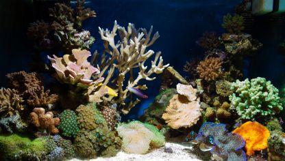 Areca palmera tropical esbelta y aireada hogarmania for Comida para peces tropicales acuario