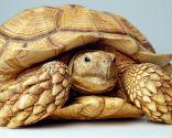 animales exóticos - tortugas tierra