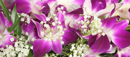 Flores románticas: orquídeas