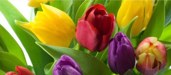 Flores románticas: tulipanes
