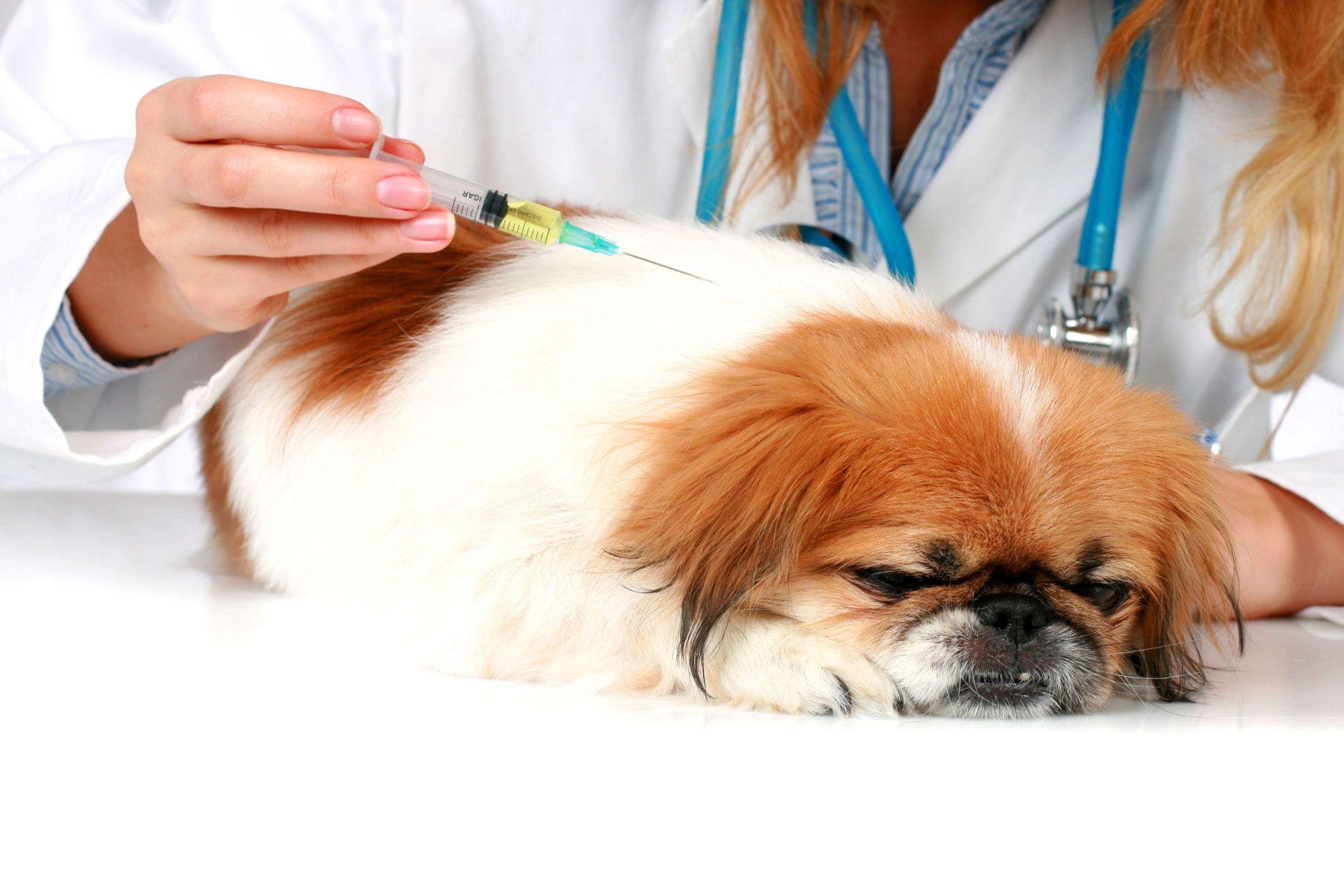 cuidados mascotas primavera - leishmaniosis