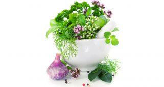 Plantar plantas aromáticas y culinarias