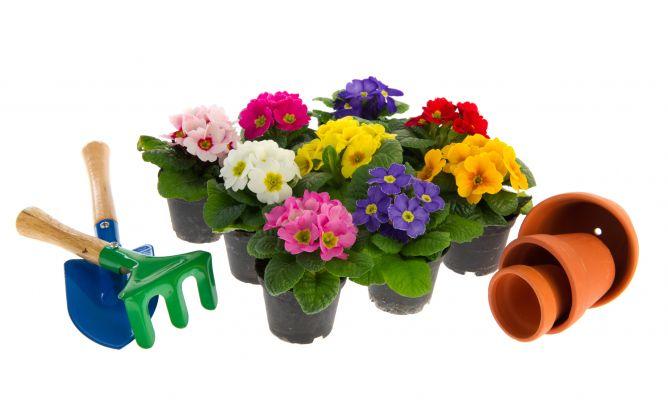 Pr mulas variedades y plantaci n bricoman a - Bricomania jardineria ...