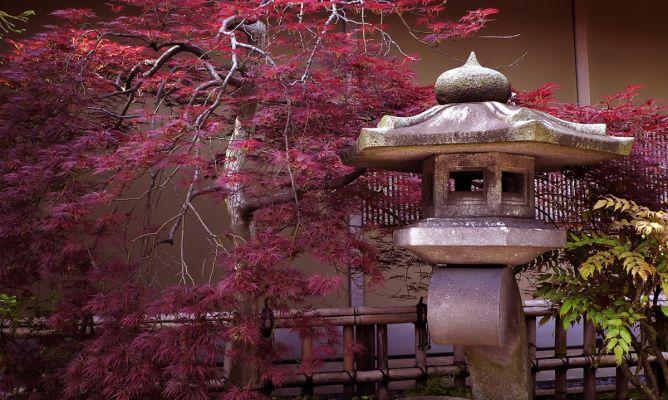 Variedades del arce japon s bricoman a - Arce japones cuidados ...
