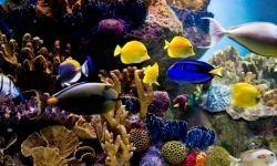 acuario peces tropicales agua salada