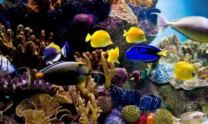 Acuario para peces tropicales de agua salada decogarden for Peces tropicales