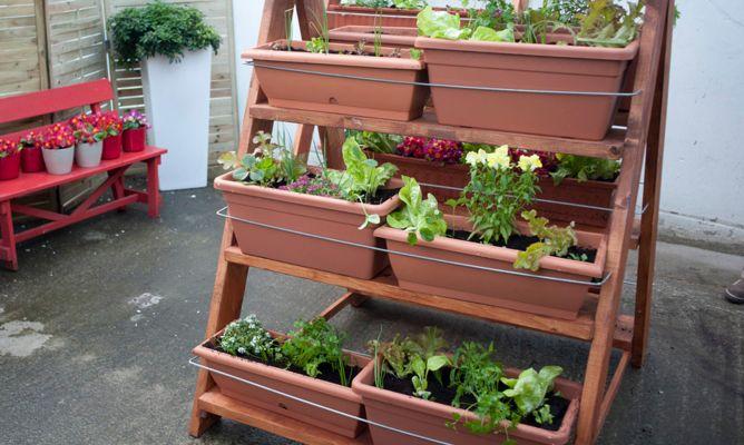 Plantaciones para huerto urbano bricoman a for Bricomania jardin