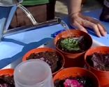 Reproducir Begonia Rex por esquejes de hojas